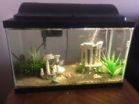 10 gallon tank with everything