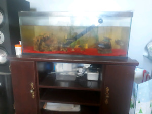 South African Oscars plus tank filters and lights for sale