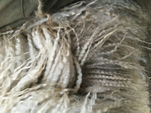 BFL crossed sheep with great fibre