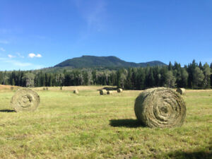 Organic Grass Mix Hay for horses