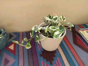 Plant sale today! Many healthy, mature plants in ceramic pots.