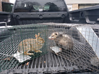 Pest Control  Wildlife Removal