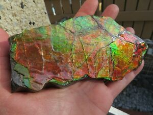 Ammonite/ Ammolite Piece #1