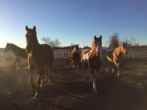 Well Cared for Horse Boarding 15 mins North of Cochrane