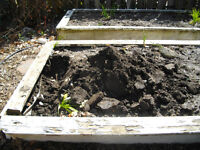 Digging out raised garden bed Petrolia