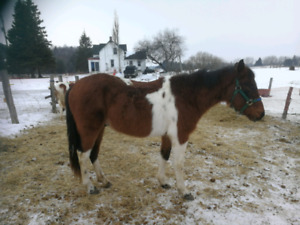 Horses for sale/trade