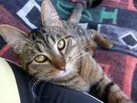 Adopt A Cat - Save A Life!