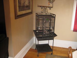 Green Cheek Conure and roll around Cage and toys