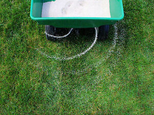 Premium Fall Lawn Care Service | Shark Lawn Specialists Stratford Kitchener Area image 1