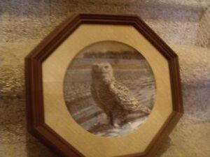 Owl Plate Collectibles Belleville Belleville Area image 7