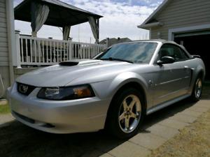 Mustang 2004 Décapotable!