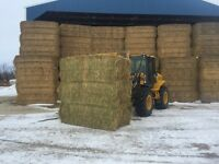 Hay and straw for sale