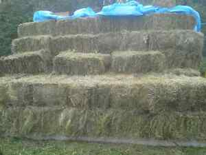Square hay bales $5 each