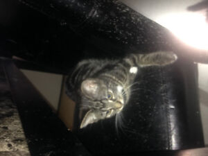 Female Kitty looking for home