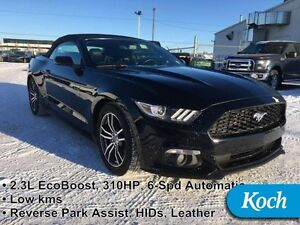 2015 Ford Mustang EcoBoost Premium   - Low Mileage