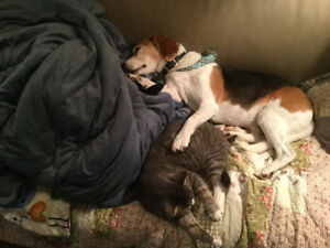 Looking for Dog-Friendly 2 Bedroom + Apartment
