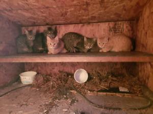 Free wild kittens