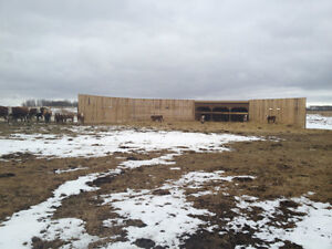 Horse & cow calf  Shelters. Strathcona County Edmonton Area image 2