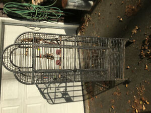 Beautiful wrought iron bird cage, show piece plus toys and bowls