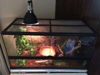 Ball Python with Terrarium and all Accessories