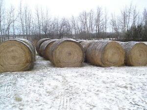 hay for sale Edmonton Edmonton Area image 2