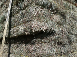 Hay and Straw for Sale, Small Squares