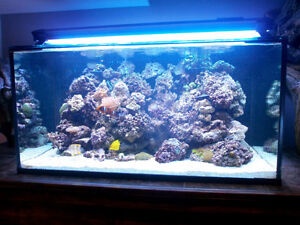 Complete 120 gallons reef system