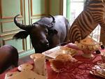 Bull in a China Shoppe