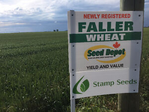 Faller CNHR (Canadian Northern Hard Red) spring wheat seed