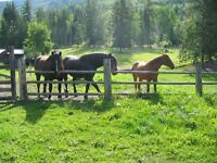 Horse pasture and Paddocks