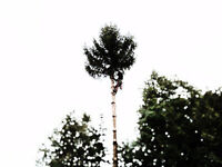 Certified Arborist for all your Tree care needs and more!