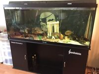 HUGE 120 Gallon fish tank for sale with stand!