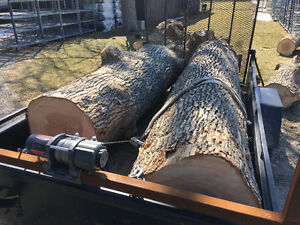 Looking for logs