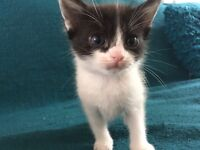 Gorgeous kitten ready to pick up today!