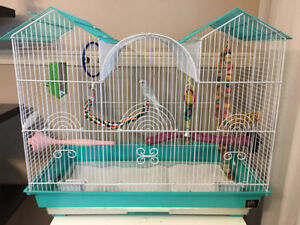 Beautiful young male budgie with amazing cage & accessories