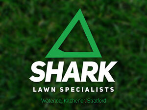 Premium Fall Lawn Care Service | Shark Lawn Specialists Stratford Kitchener Area image 6