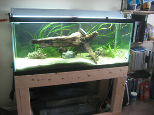 75 Gallon Tank with Puffers
