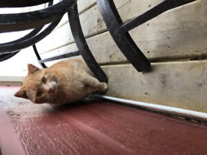 Free Outdoor Cats