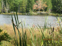 100 ACRES WATERFRONT VACANT RURAL LAND