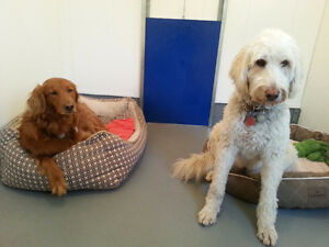 Birchview Dog Boarding -just 30 mins from south end of Cambridge Cambridge Kitchener Area image 4
