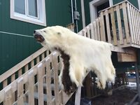 Polar Bear Hide For Sale