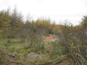 PRIME 4 ACRES ZONED COMM/LIGHT INDUSTRIAL HOLYROOD ACCESS ROAD St. John's Newfoundland image 8
