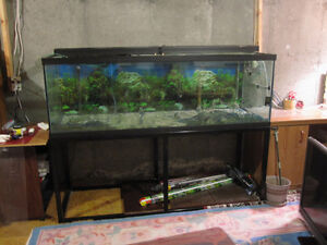 180 Gallon Fish Tank with stand and lights