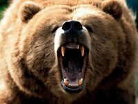 Grizzly Moving - Cheap Furniture and Appliance Delivery!