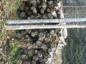 350 cedar posts- bulk sale Gatineau Ottawa / Gatineau Area image 2