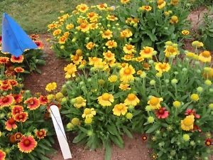 Looking to lease or buy land and barn for Organic Flower Farming
