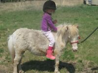 Starting a Pony Club out North-West of City Near Borden SK