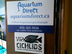 Tirage Chez VIP CICHLIDS CANADA