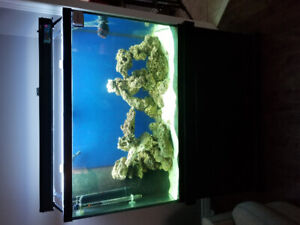 110 gallon Saltwater Aquarium