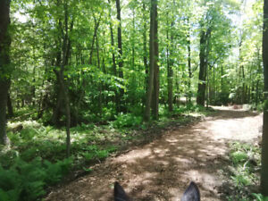 Horse Boarding Available at Edgewood